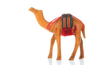 Camel isolated over white background