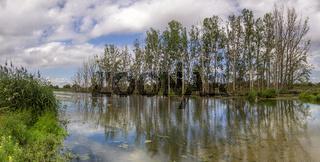 Trees along a creek