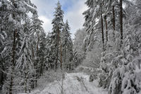 southern Black Forest in winter 1