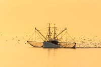 Fishing Boat with Nets and Swarm of Seagulls at Sunset, North Sea, Germany