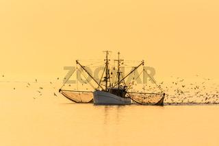 Fischkutter mit ausgelegten Netzen und Schwarm von Seemöwen bei Sonnenuntergang, Nordsee