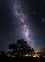 Amazing night scene of the milky way falling toward a silhouette of leafy tree with millions of stars as sand in the sky