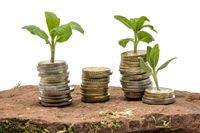 Small plants grow out of stacked money coins on a sandstone isolated on white
