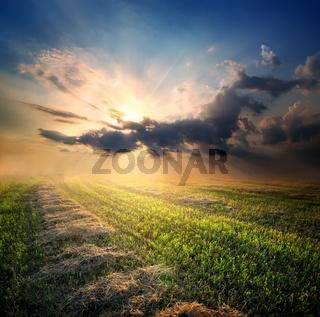 Beveled field of wheat