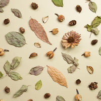 Autumn dry leaves on khaki brown background. flat lay, top view