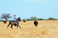 Pasture work in Namibia