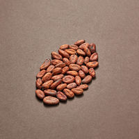 Cocoa seeds in the shape of big cocoa bean.