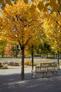 Bäume mit Herbstfärbung
