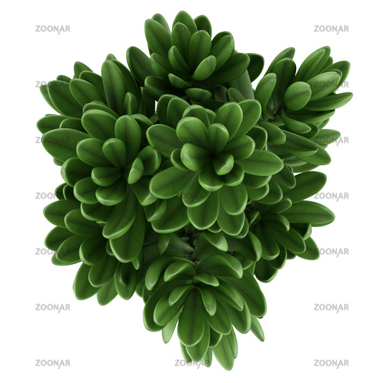 top view of houseplant in pot isolated on white