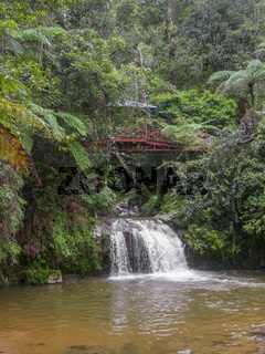 jungle in Malaysia