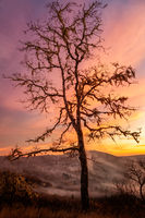 Lone Tree Watching Over the Valley at Sunset