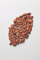 Big bean from freshly dried natural cocoa peas.