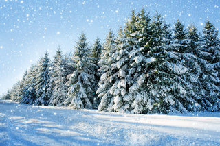 Winter christmas forest with falling snow and trees.