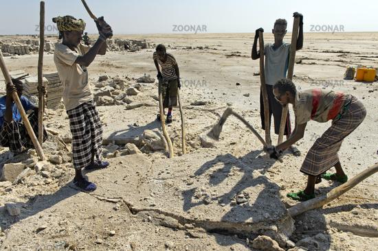 Afar salt workers break salt blocks from the salt crust of Lake Assale,Danakil Depression,Ethiopia