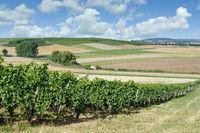 Vineyard Landscape in Rhinehessen Wine region,Germany
