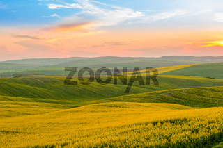 Moravia Hills and Rapeseed Fields