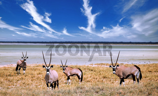 Spießböcke, Oryx, Etosha-Nationalpark, Namibia | Oryx, Etosha National Park, Namibia