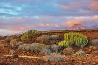 Desert area in the south of Tenerife