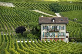 Villa in den Weinbergen, Féchy, Waadt, Schweiz
