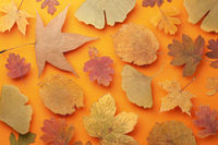 Autumn Colored Leaves Background