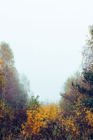 Trees and bushes in fog