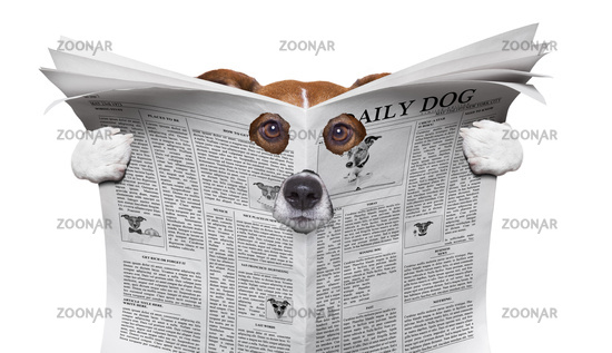 spy dog reading a newspaper