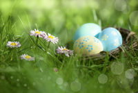 Colorful Easter eggs on a sunny madow with daisy flowers