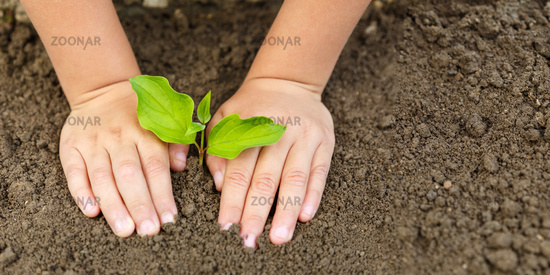 Child hands planting tree plant nature life ecology concept garden banner copyspace copy space