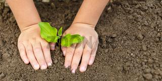 Child hands planting tree plant nature life ecology concept garden banner copyspace copy space