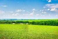 Growing crop on field