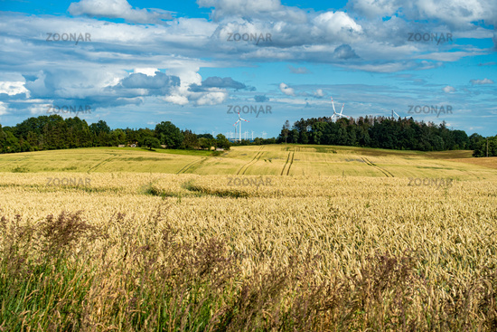 Typical summer landscape in Mecklenburg-Vorpommern, area around Bad Doberan, Germany