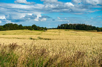 Typical summer landscape in Mecklenburg-Vorpommern, area around Bad Doberan, Germany