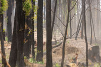 Bush regeneration in the aftermath of bush fires