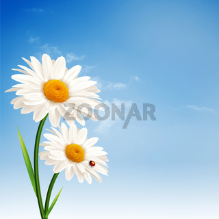 Daisy flowers. Abstract natural backgrounds for your design