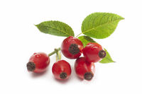 Rosehip isolated