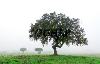 Wet Landscape With Lonely Tree in Morning Fog