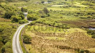 sheeps Ireland