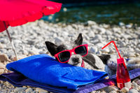 dog siesta on towel with umbrella and cocktail