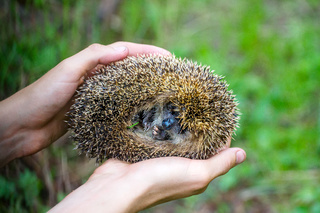hedgehog in hands trust leaving care