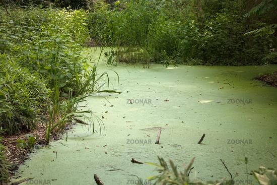 Tiergarten 023. Germany