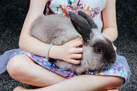 A Lop Rabbit With A Little Girl