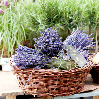beautiful violet lavender bouquet in basket
