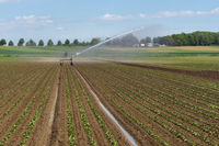 Irrigation of a vegetable field, Germany