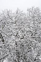 Schneefall 2