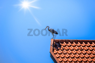 Heron on a red roof