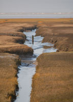 Priel and wetland on the North Sea island of Sylt