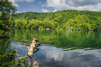 Large fallen tree submerged in a lake in Plitvice Lakes