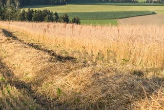 Stroh bei der Getreideernte eines Kornfeldes