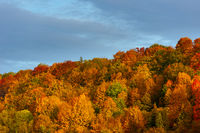 Line of beautifully multicolored autumn tree foliage in October with blue sky and clouds on sunny day