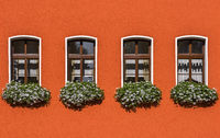 Four Windows with flowers